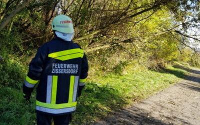 T7/17 Sturmschaden beseitigen Leitenberg