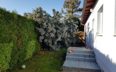 T8/17 Umgestürzter Baum im Ahragarten